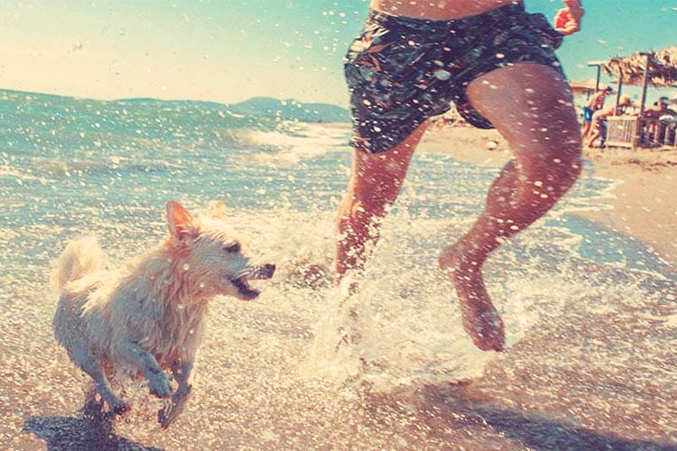 huisdier mee op vakantie